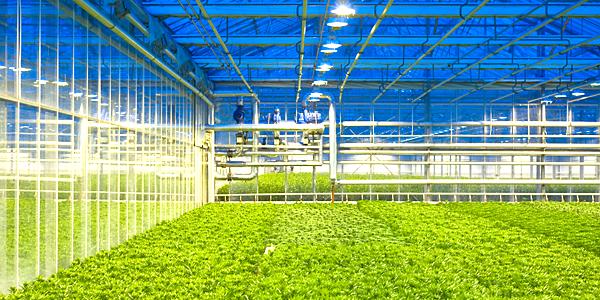hvac industry segments indoor agriculture